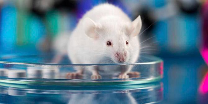 Titanoceno, medicamento probado con éxito contra el cáncer en ratones